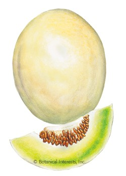 Melon Honeydew Sweet Delight Seeds