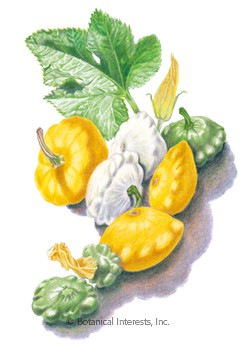 Squash Summer Scallop (Patty Pan) Blend HEIRLOOM Seeds