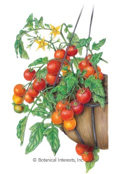 Tomato Cherry Lizzano Seeds