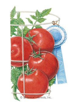 Tomato Bush Red Pride Seeds
