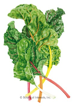 Swiss Chard Celebration Seeds