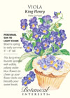 Viola King Henry HEIRLOOM Seeds