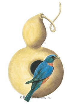 Gourd Hard-Shelled Birdhouse HEIRLOOM Seeds