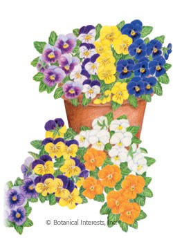 Viola Sorbet XP Select Blend Seeds