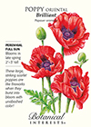 Poppy Oriental Brilliant Seeds