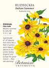 Rudbeckia Indian Summer Seeds