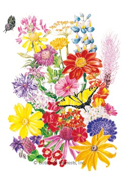 Flower Mix Bring Home the Butterflies Seeds