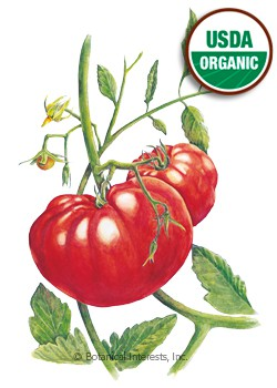 Tomato Pole Beefsteak Organic HEIRLOOM Seeds
