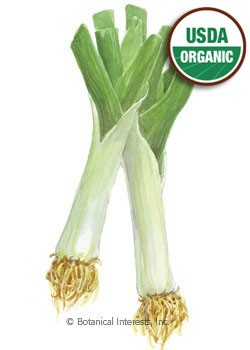 Leek King Richard Organic Seeds