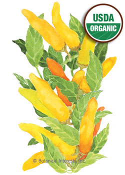 Pepper Chile Hungarian Yellow Wax Organic HEIRLOOM Seeds