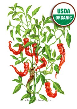 Pepper Sweet Jimmy Nardello Organic HEIRLOOM Seeds