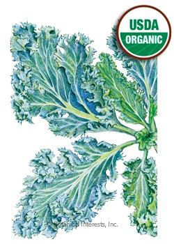 Kale Dwarf Blue Curled Organic HEIRLOOM Seeds