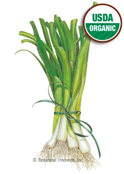 Onion Bunching/Scallion White Lisbon Organic Seeds