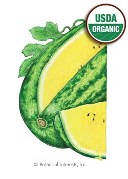 Watermelon Mountain Sweet Yellow Organic HEIRLOOM Seeds