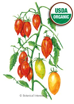 Tomato Cherry Artisan Tiger Stripes Blend Organic Seeds