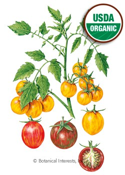 Tomato Cherry Artisan Bumble Bee Blend Organic Seeds