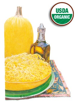Squash Winter Vegetable Spaghetti Organic HEIRLOOM Seeds