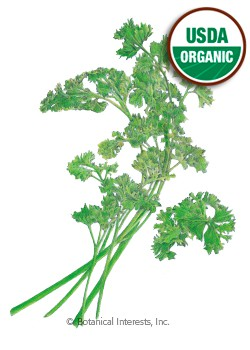 Parsley Moss Curled Organic HEIRLOOM Seeds