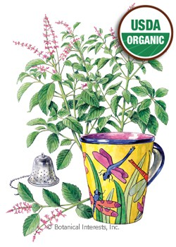Basil Holy Tulsi Organic HEIRLOOM Seeds