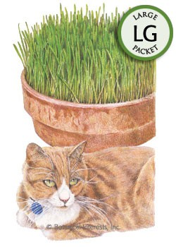 Cat Grass Oats Seeds (LG)