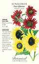 Sunflower Two Queens HEIRLOOM Seeds (LG)