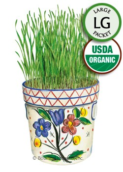 Wheatgrass Liquid Sunshine Organic HEIRLOOM Seeds (LG)