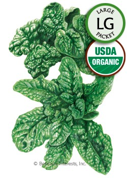 Spinach Bloomsdale Organic HEIRLOOM Seeds (LG)
