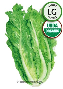 Lettuce Romaine Parris Island Cos Organic HEIRLOOM Seeds (LG)