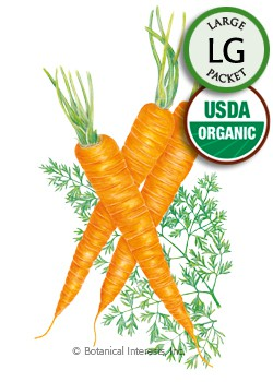 Carrot Danvers 126 Organic HEIRLOOM Seeds (LG)