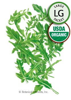 Baby Greens Arugula Organic HEIRLOOM Seeds (LG)