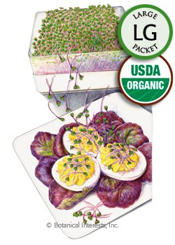 Sprouts Purple Kohlrabi Organic Seeds (LG)