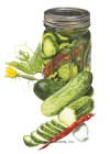 Cucumber Homemade Pickles Seeds