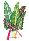Swiss Chard Bright Lights Seeds