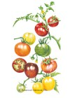 Tomato Cherry Rainbow Blend Seeds