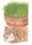Cat Grass Oats Seeds