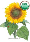 Sunflower Dwarf Sunspot Organic Seeds