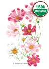 Cosmos Sea Shells Blend Organic HEIRLOOM Seeds