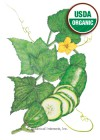 Cucumber Straight Eight Organic HEIRLOOM Seeds