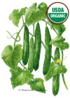 Cucumber Japanese Tasty Green Organic Seeds
