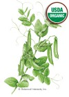 Pea Snap Sugar Snap Organic Seeds