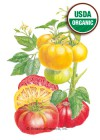 Tomato Pole Brandywine Red & Yellow Organic HEIRLOOM Seeds