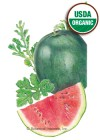 Watermelon Sugar Baby Organic Seeds