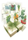 Container Vegetable Seed Collection