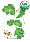 Cilantro/Coriander Long Standing Organic HEIRLOOM Seeds