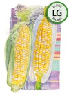Corn Sweet (su) Honey and Cream Seeds (LG)