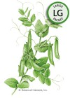 Pea Snap Sugar Daddy Seeds (LG)