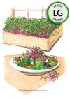 Microgreens Early Wonder Beet HEIRLOOM Seeds (LG)