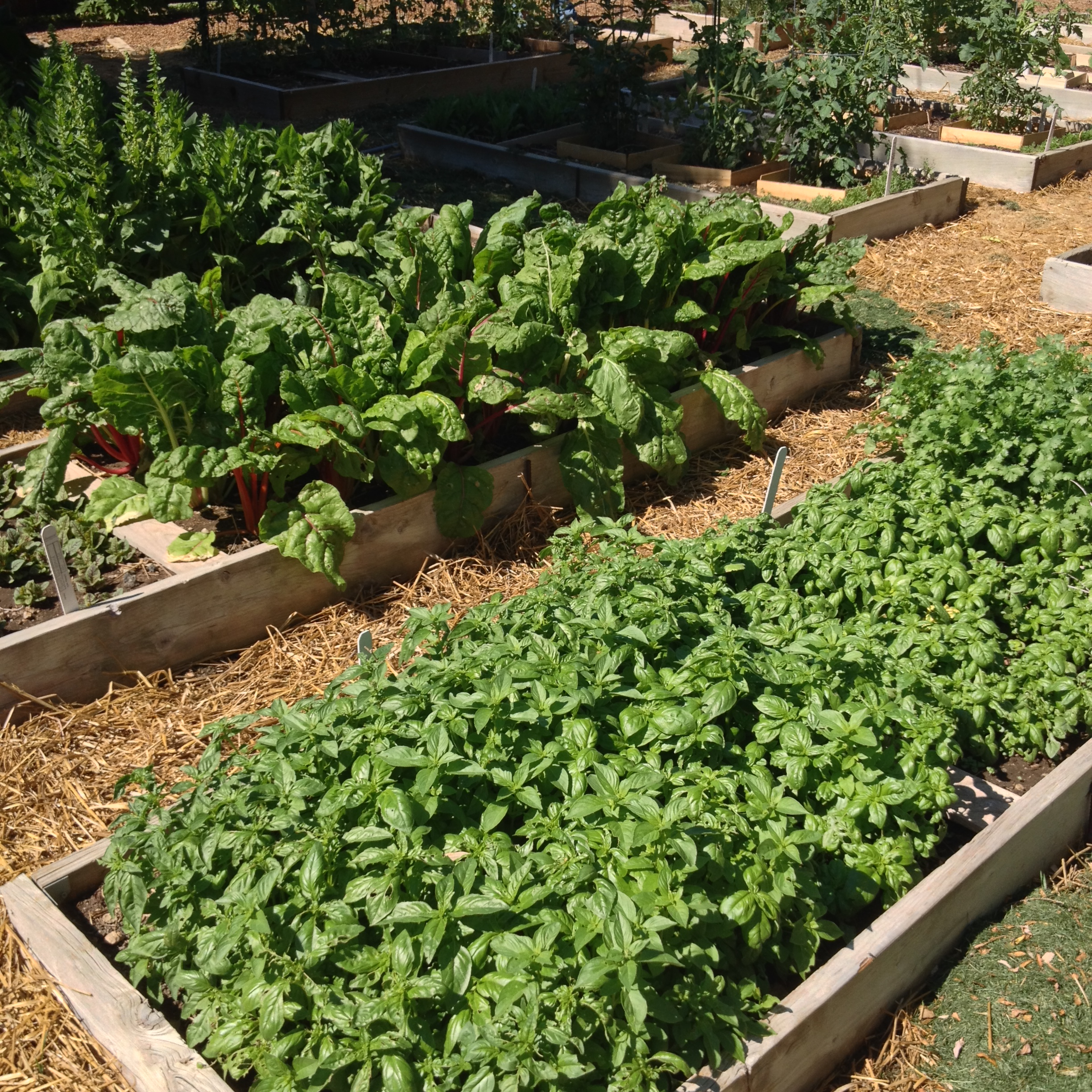 "6 Steps to a ""Greener"" Garden"
