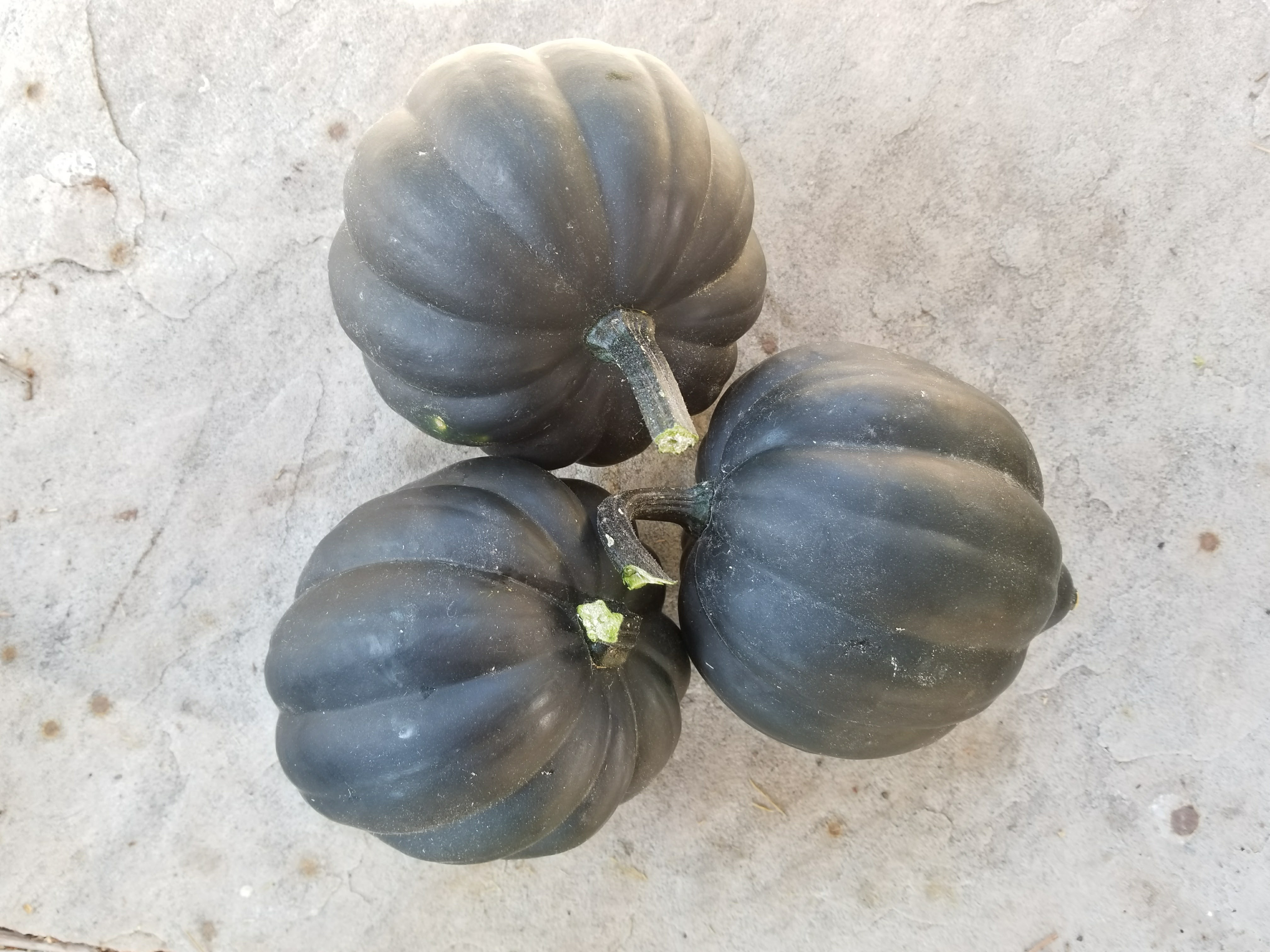 Squash (Winter): Sow and Grow Guide