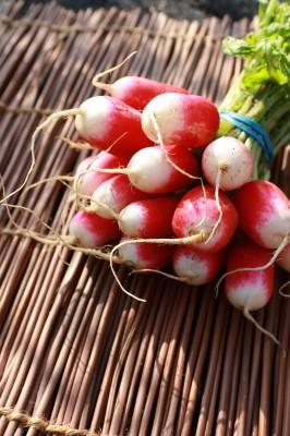 Radish: Sow and Grow Guide